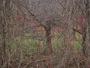Edward Burtynsky Grey County Ontario Natural Order