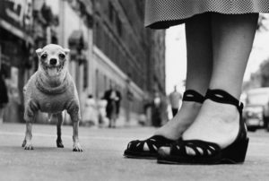 Elliott Erwitt Homeland USA