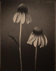 Tom Baril Botanica
