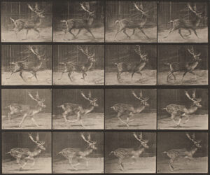 Eadweard Muybridge birds and wild animals