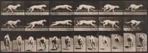 Eadweard Muybridge domestic animals
