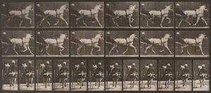 Eadweard Muybridge Horses